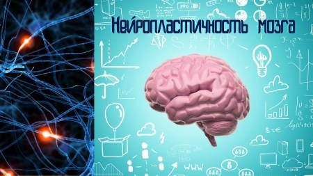 Нейропластичность Мозга / The Brain That Changes Itself (2015)